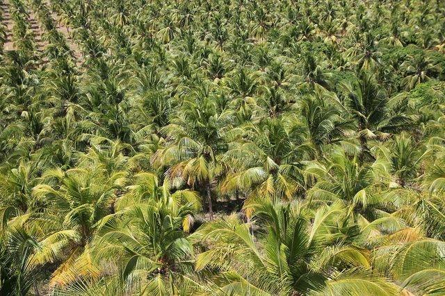 Chính phủ quên ngành dừa